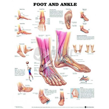BODYLINE FOOT & ANKLE CHART - LAMINATED